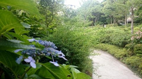 DSC_5435 (480x268).jpg